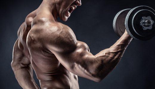 力強い上腕二頭筋は最高のファッション|種類別上腕二頭筋の鍛え方ガイド